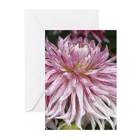 Colorful Dahlia Flower 218 Greeting Cards
