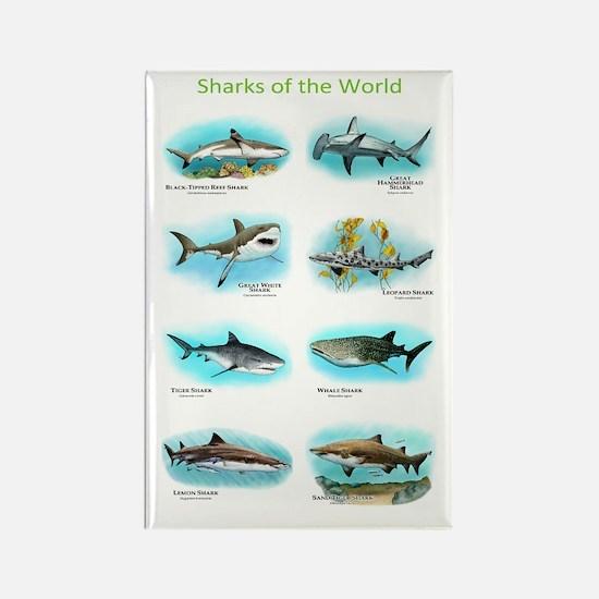Sharks of the World Rectangle Magnet