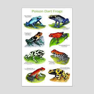Poison Dart Frogs Mini Poster Print