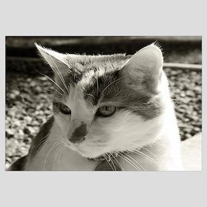 16x20 Sun Kitty