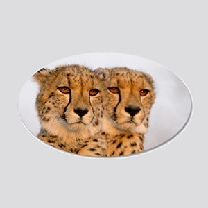 Cheetahs 22x14 Oval Wall Peel