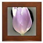 Pink Tulip Abstract Framed Tile