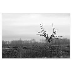 """The Tree"" B&W Art Photo Poster"