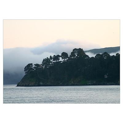 fog behind trees san francisco bay framed photo Poster