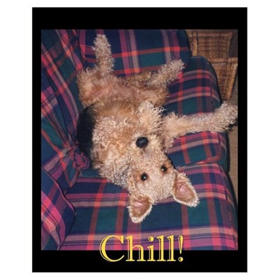 Cool Airedale , 16x20 Poster