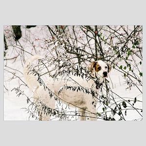 Snow Setter Print