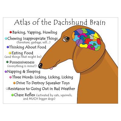 Dachshund Brain Atlas Poster