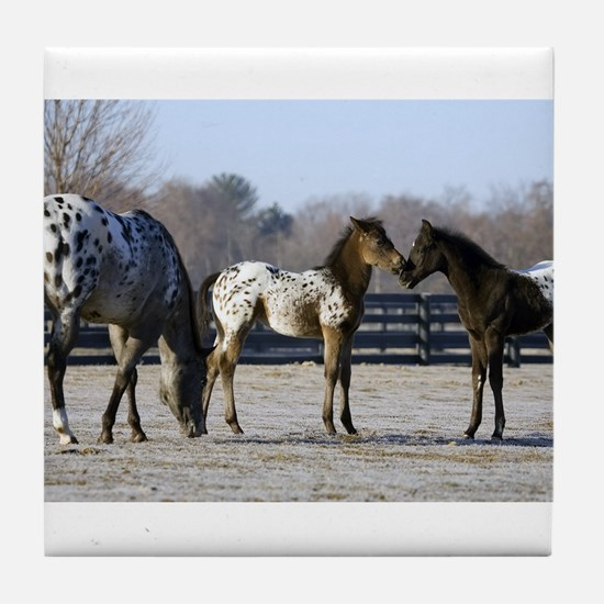 2006 foals Tile Coaster