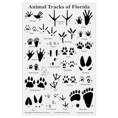 Animal Tracks Florida Off White Poster