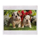 Bulldog puppy Fleece Blankets