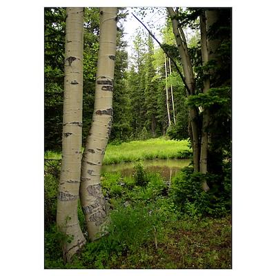 Mountian pine trees Poster