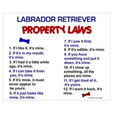 Labrador Retriever Property Laws 3 Pri Poster