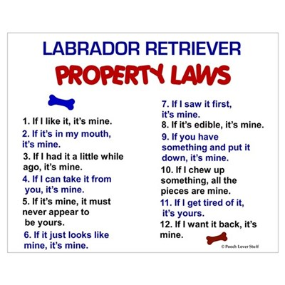 Labrador Retriever Property Laws 3 Pri Framed Print