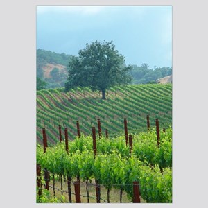 favorite scrub oak in vineyard spring 2002 photo