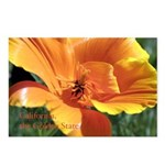 Golden Poppy Postcards (Package of 8)