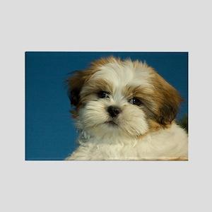 Shih Tzu puppy Rectangle Magnet