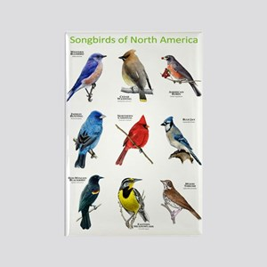 Songbirds of North America Rectangle Magnet