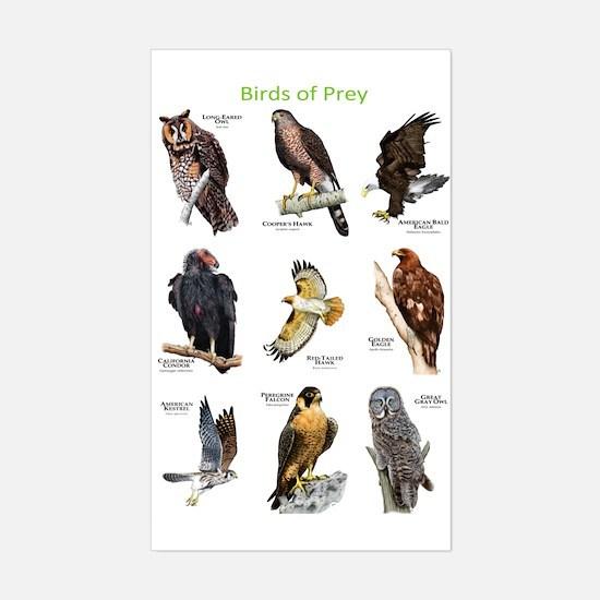 Northern American Birds of Prey Decal