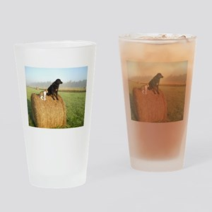 Cat and Dog on Hay Bale Drinking Glass
