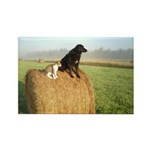 Cat and Dog on Hay Bale Rectangle Magnet (100 pack
