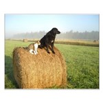 Cat and Dog on Hay Bale Small Poster