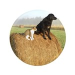 Cat and Dog on Hay Bale 3.5
