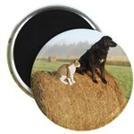 Cat and Dog on Hay Bale Magnet