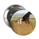 Cat and Dog on Hay Bale 2.25