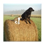 Cat and Dog on Hay Bale Tile Coaster