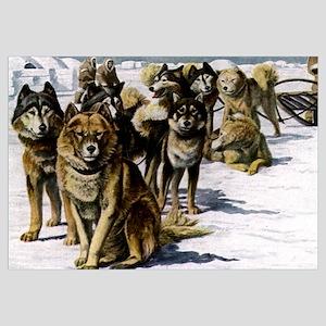 Sled Dog Husky Portrait