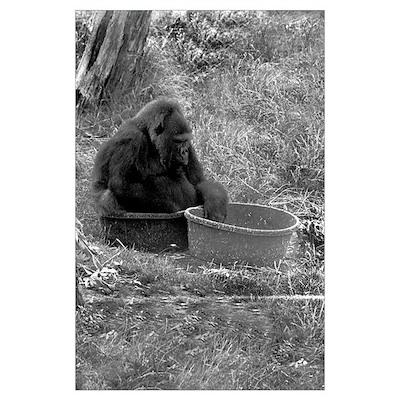 Gorilla in a Tub Poster