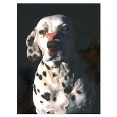 Dalmatian Lonely Heart Poster