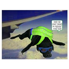 Black Lab Skydiving Poster