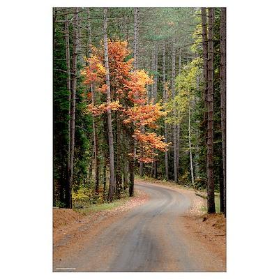 Orange Colored Tree Poster