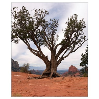 Sedona Tree 11x14 Canvas Art