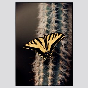 Butterfly Cactus Art/Photography