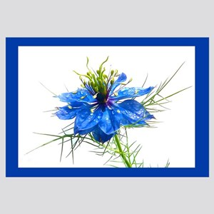 """Blue """"Love-in-the-Mist"""""""
