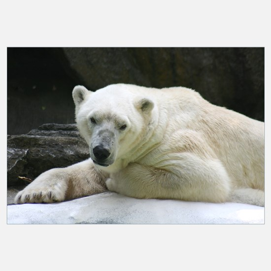 -Polar Bear