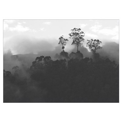 black + white sausalito foothills trees fog photo Poster