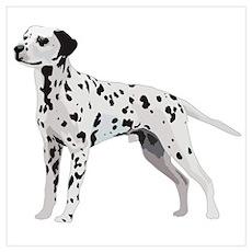 Proud Dalmatian Poster