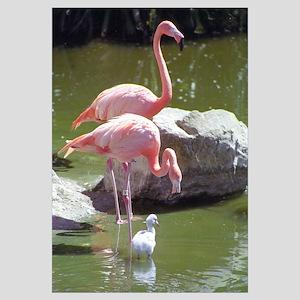 Growing Up Flamingo