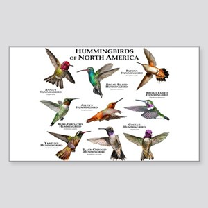 Hummingbirds of North America Sticker (Rectangle)
