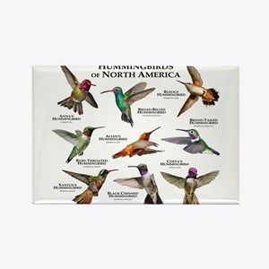 Hummingbirds of North America Rectangle Magnet