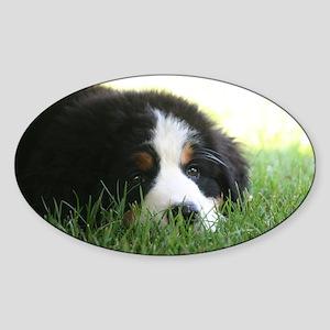 Bernese Puppy Sticker (Oval)