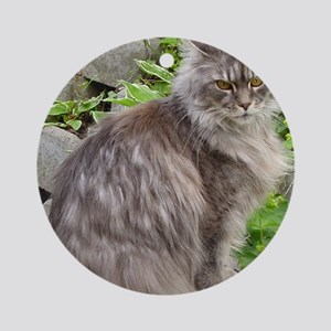 maine coon sitting 2 Round Ornament