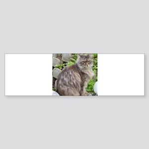 maine coon sitting 2 Bumper Sticker