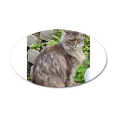 maine coon sitting 2 Wall Decal