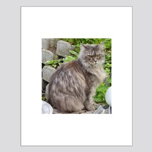 maine coon sitting 2 Posters
