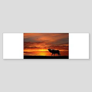 Elk shadow at sunrise Bumper Sticker