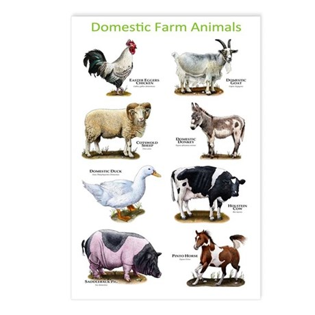 Domestic Farm Animals Postcards (Package of 8)